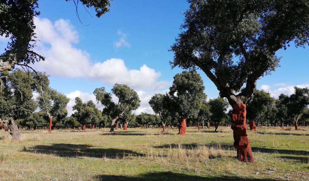 Sentir Salamanca .Nordeste en Invierno