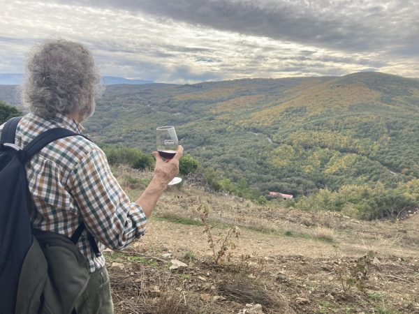 Cata en el viñedo