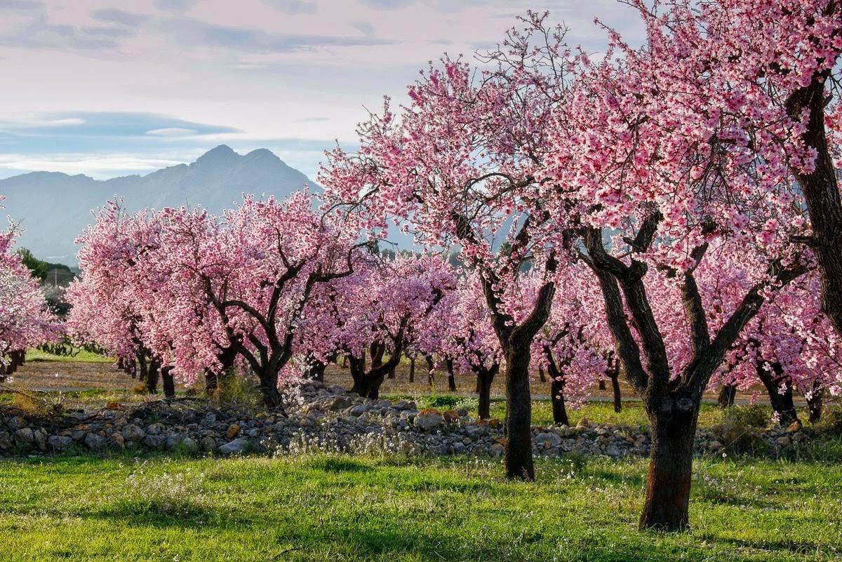 Ruta para primavera: colores y el Camino de Hierro