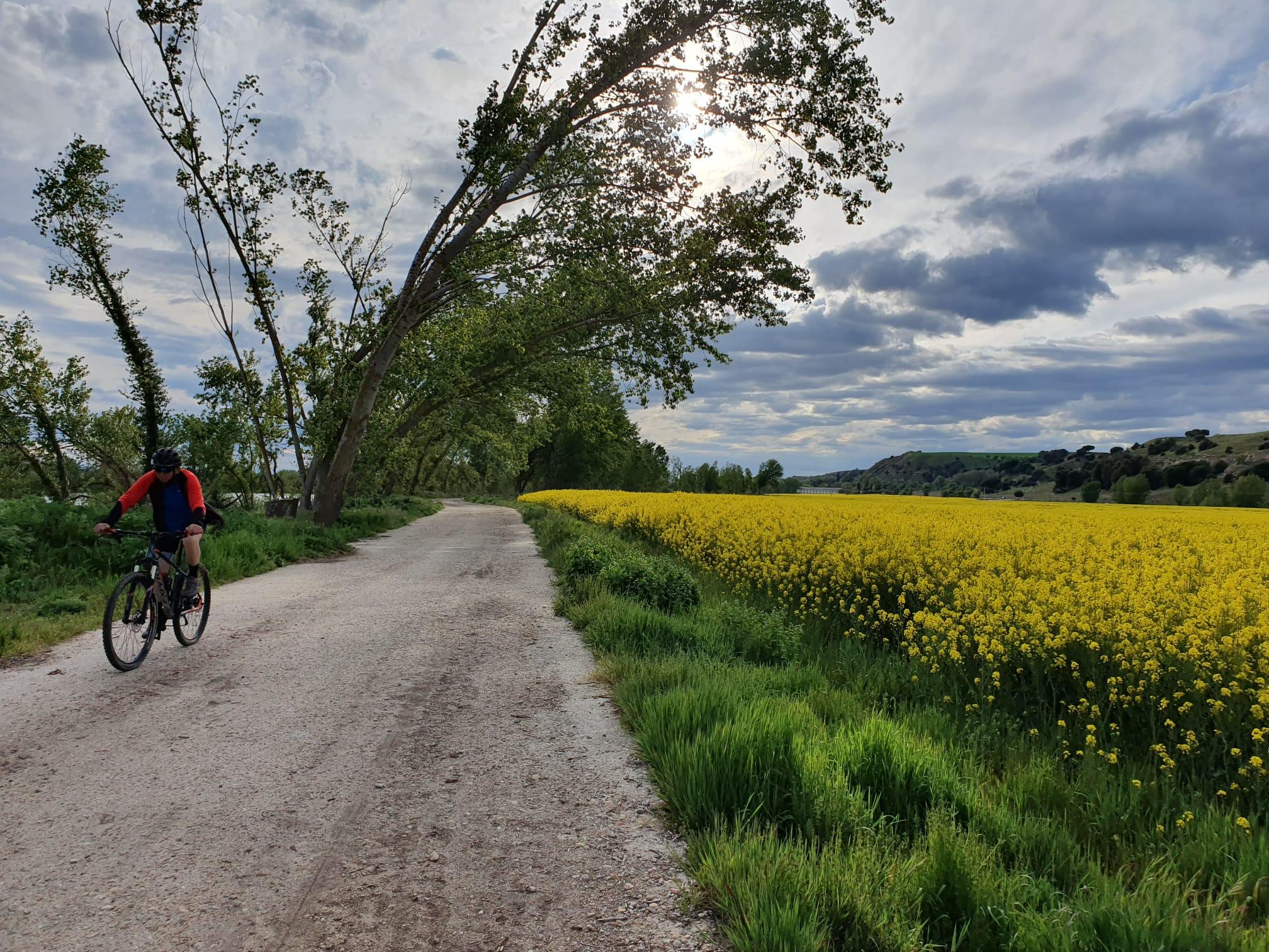 Salamanca en verde y amarillo